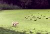 Το «γρασίδι» δεν είναι πάντα αυτό που φαίνεται (video)