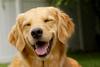 Απίστευτη φάρσα... για σκύλους (video)