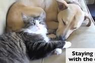 Η μέρα του Αγίου Βαλεντίνου για τις μοναχικές γάτες (video)