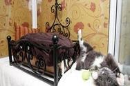 Ξενοδοχείο 5 αστέρων για... γάτες (video)