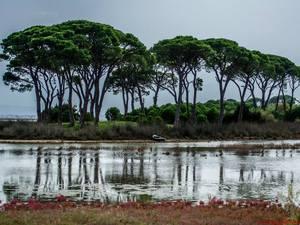 Η Καλόγρια το Φθινόπωρο θυμίζει το Serengeti park της Τανζανίας! (Δείτε φωτο)