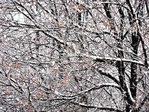 Δυτική Ελλάδα: Άρωμα... Χριστουγέννων από τις αρχές Νοέμβρη