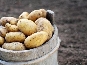 Λαχταριστές συνταγές με... πατάτες! (pics)