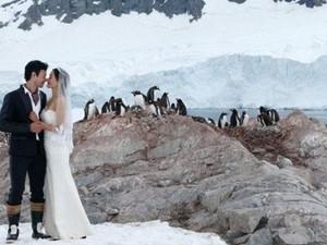 Ζευγάρι παντρεύτηκε με φόντο αποικία πιγκουίνων (pics+video)