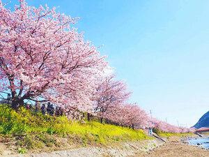 Άνθισαν οι κερασιές στην Ιαπωνία (pics)