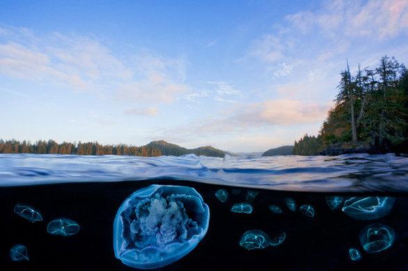 Η ομορφιά κάτω από τα παγωμένα νερά του Ειρηνικού (pics)