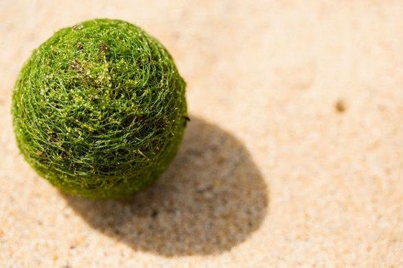 Οι παράξενες και σπάνιες ''πράσινες μπάλες'' των λιμνών (pics)