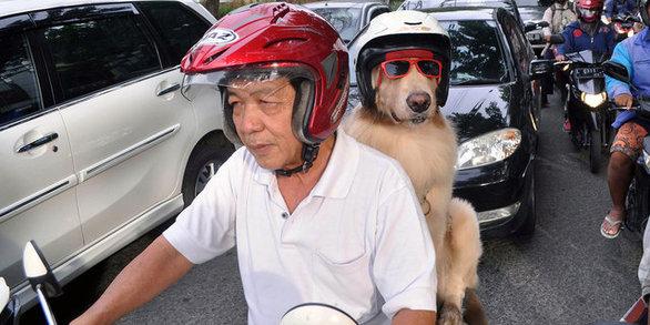 Σκύλος μηχανή μηχανές