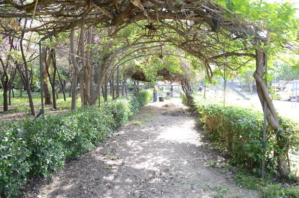 Πάτρα: Ο κήπος του Σκαγιοπουλείου έγινε... παράδεισος! - Δείτε φωτογραφίες