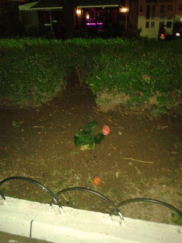 Πάτρα: Τριαντάφυλλα και γαρδένιες στον… κήπο της Τριών Ναυάρχων (pics)