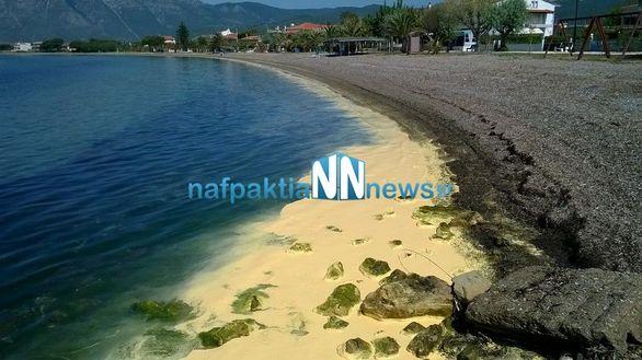 Έγιναν κίτρινες και οι παραλίες της Ναυπάκτου (pics+video)