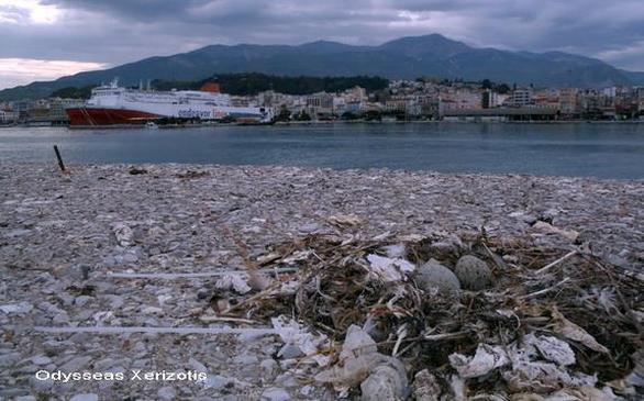 Πάτρα: Με την βαρκούλα στο εκκλησάκι του Αϊ Νικόλα στο παλαιό λιμάνι (pic)