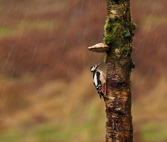 Ζωάκια προσπαθούν να αποφύγουν την βροχή (pics)
