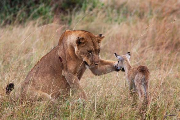 φίλοι ζώα
