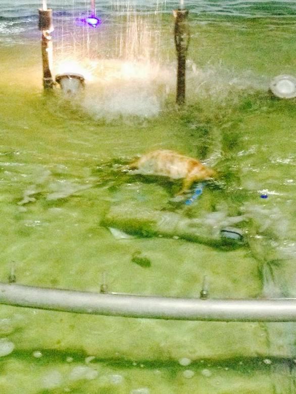 Πύργος: Νεκρός σκύλος εντοπίστηκε μέσα στο σιντριβάνι (pics)