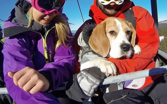 Eli: Η σκυλίτσα που λατρεύει το χιόνι (pics+video)