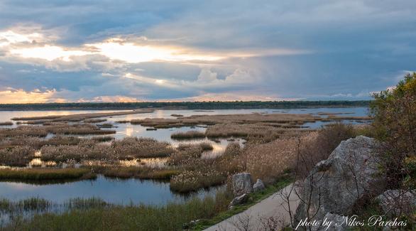 Εκεί όπου το δάσος φτάνει έως στη θάλασσα - Αφιέρωμα στη Στροφυλιά (pics+vids)