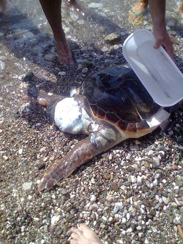 Πάτρα: Συγκινητικές στιγμές - Λουόμενοι προσπαθούν να σώσουν μια χελώνα Καρέτα - Καρέτα (δείτε φωτο)