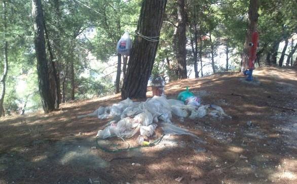 Πάτρα: SOS για το Δασύλλιο - Από χώρος πρασίνου κινδυνεύει να γίνει σκουπιδότοπος (pic)
