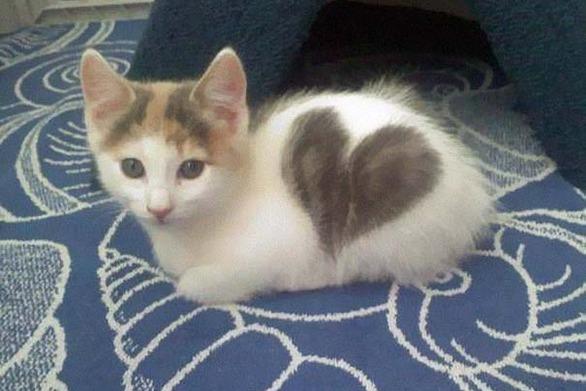 Γάτες που διαθέτουν περίεργα σημάδια και τις κάνουν να... ξεχωρίζουν! (pics)