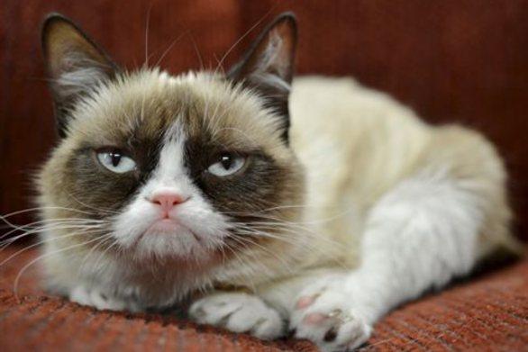 Η «κατσούφα γάτα» έκανε πλουσιότερο το αφεντικό της κατά... 81 εκατ. ευρώ