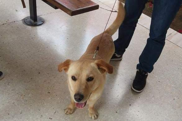 Πάτρα: Σκυλάκι που είχε χαθεί βρέθηκε στην περιοχή του ΤΕΙ