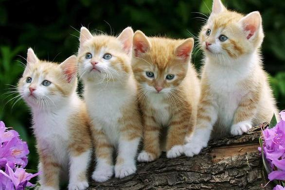 Μελέτη ανατρέπει τα δεδομένα για τις γάτες και την εξυπνάδα