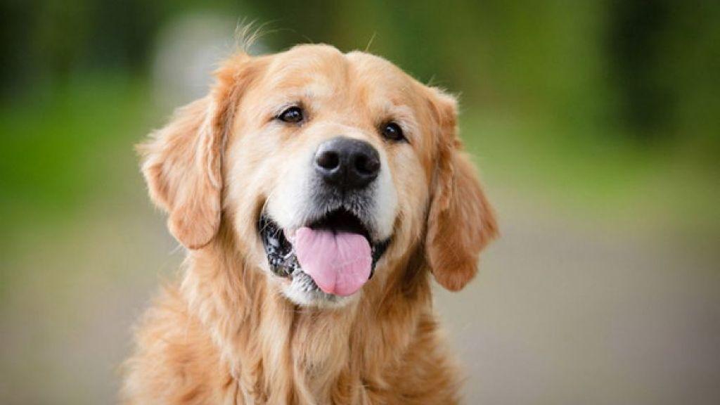 Αποτέλεσμα εικόνας για σκυλίτσα