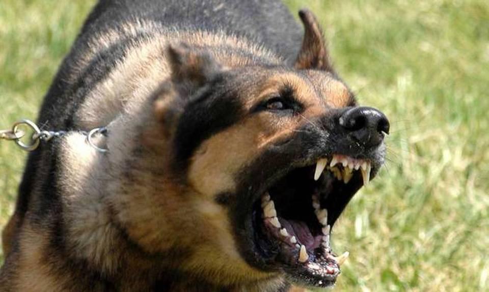 Αποτέλεσμα εικόνας για αδεσποτα σκυλια