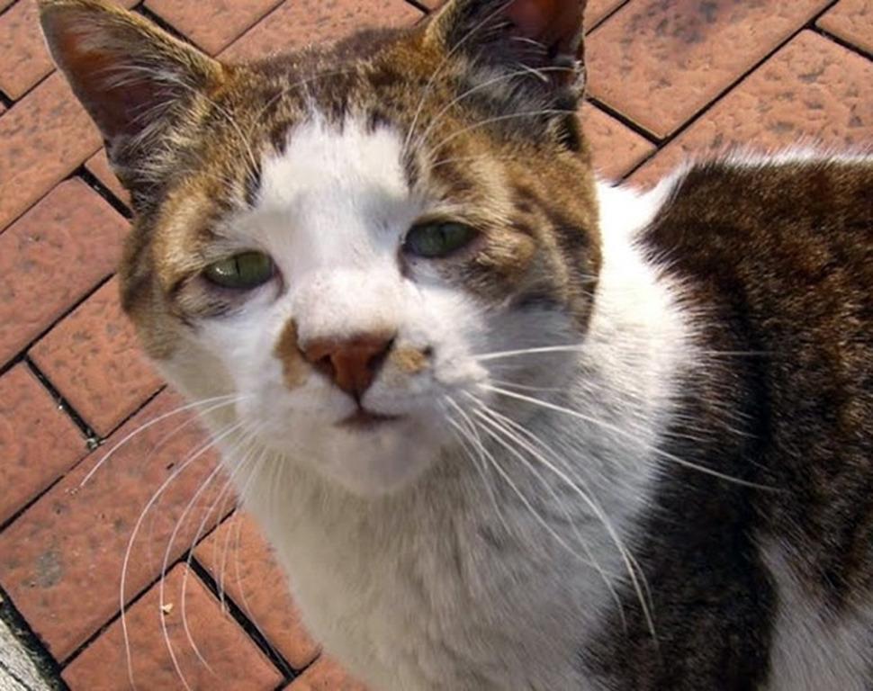 Τα άσχημα γατάκια του διαδικτύου (pics)