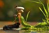 Ο κόσμος των μανιταριών μέσα από μοναδικές φωτογραφίες (pics)