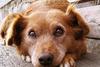 Πάτρα: Διαρρήκτης μπήκε σε αυλή και μαχαίρωσε σκύλο!