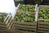 Πάτρα: Δωρεάν μήλα και ακτινίδια για τις πολύτεκνες οικογένειες