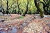 Ποια είναι η κρυμμένη ομορφιά των Καλαβρύτων; - O κόσμος του νερού και των πλατάνων! (pics+vids)