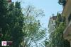 'Θέριεψαν' για τα καλά τα δέντρα στους δρόμους του Σκαγιοπουλείου (pics)