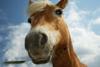 Έρευνα - Οι άνθρωποι και τα άλογα έχουν παρόμοιες εκφράσεις!