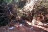 Ένα δάσος/σκουπιδότοπος κοντά στην Πάτρα! (Δείτε φωτο)