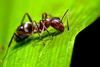 Τα περισσότερα μυρμήγκια - εργάτες... λουφάρουν