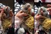 Όταν ένας αρουραίος τρώει... σπαγκέτι! (video)