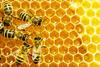 Ο επικίνδυνος ιός που εξαφανίζει τις μέλισσες (pic)