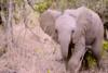 Ταξίδι ζωής στην μαγευτική Νότια Αφρική! (video)