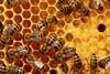 Πάτρα: Διήμερο σεμινάριο μελισσοκομίας (pics)