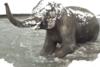 Οι απίθανες αντιδράσεις των ζώων μετά από πυκνή χιονόπτωση (video)