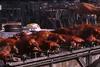 Πρωτομαγιά με κοψίδια στην Ηλεία (pics)