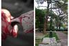 Πάτρα: Μαχαιριές στην πλατεία Όλγας - Ένας 34χρονος τραυματίας!
