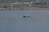 Δελφίνια 'έστησαν χορό' στην Αλυκή του Αιγίου - Δείτε βίντεο
