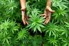 Συλλήψεις για ναρκωτικά σε Σέρρες και Πέλλα
