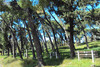 «Γερασμένο» το αλσύλλιο στο Γηροκομειό της Πάτρας - Ένας χώρος που δίνει ζωή