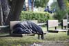 Δυτ. Ελλάδα - Μεγάλη κινητοποιήση για άστεγο άνδρα
