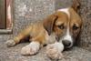Πάτρα: Επιτέλους - Βρέθηκε λύση για το θέμα της φροντίδας των αδέσποτων ζώων!